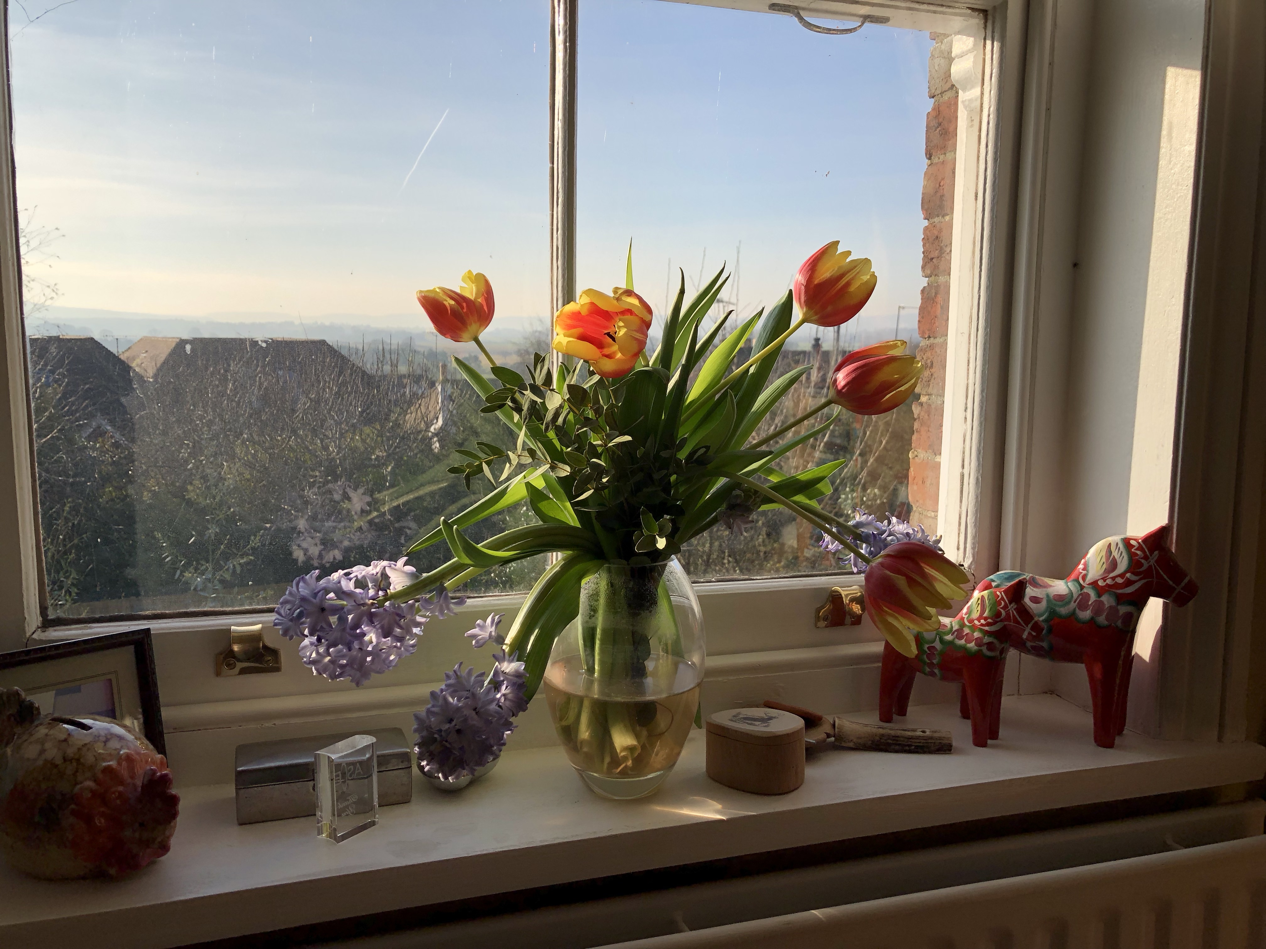 Spring flowers on a winters day